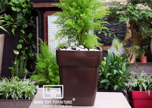 https://banghecafe.net/wp-content/uploads/2017/01/chau-trong-cay-tu-duong-son-vuong-SV37.jpg